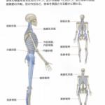 「『オ ケ ツ』のゆがみ」〜筋肉・筋膜編その2『オ ケ ツ』ってこんなに繋がってる〜